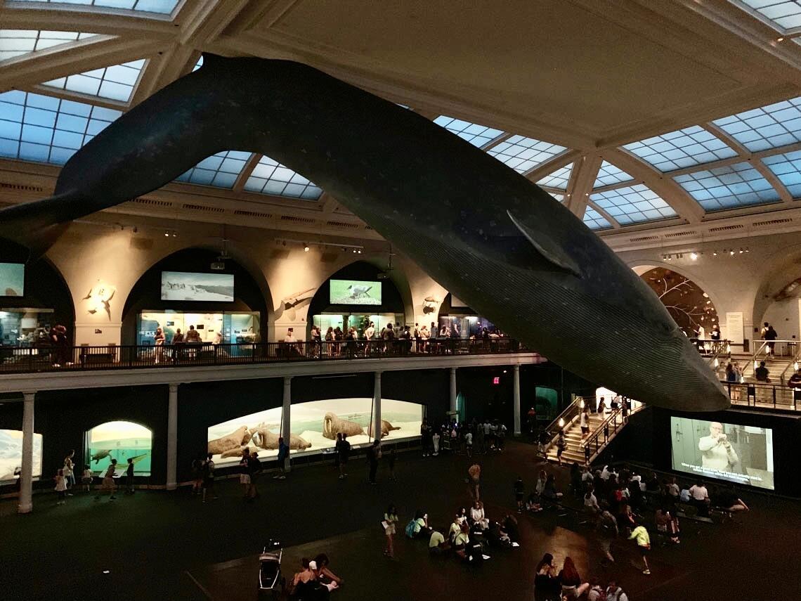 Digital Storytelling Museum